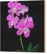 Pink Orchids 9 Wood Print