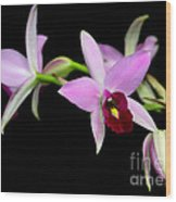 Pink Orchids Cascading Wood Print
