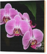 Pink Orchids In A Row Wood Print