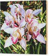 Pink Spirit Orchids Palm Springs Wood Print