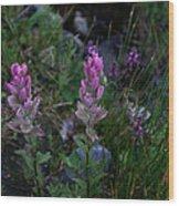 Pink Paintbrush Wood Print
