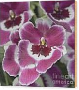 Pink Pansy Orchid Wood Print
