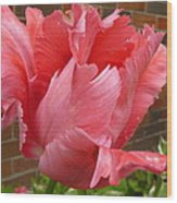 Pink Parrot Tulip Wood Print