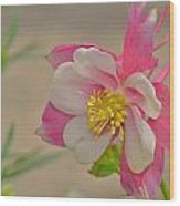 Pink Passion Wood Print by Old Pueblo Photography