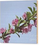 Pink Peach Blossoms Wood Print
