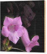 Pink Penstemon Wood Print