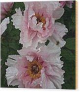 Wild Pink Peony  Wood Print