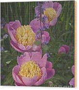 Pink Peonies In My Garden Wood Print