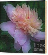 Pink Peony Flower Wood Print