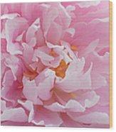 Pink Peony Flower Waving Petals  Wood Print