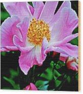 Pink Peony Garden  Wood Print