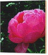Pink Peony On The Side Wood Print