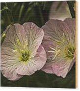 Pink Petticoats Wood Print