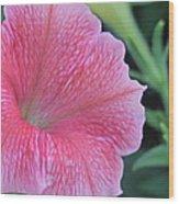 Pink Petunia Wood Print by Victoria Sheldon