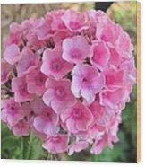 Pink Phlox 2 Wood Print