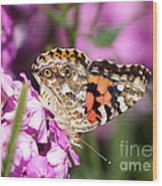 Pink Phlox With Butterfly Wood Print