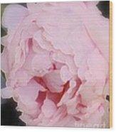 Pink Pink Wood Print