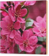 Pink Plum Blossoms Wood Print