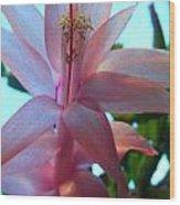 Pink Pollination Wood Print
