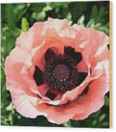 Pink Poppy Bloom Wood Print