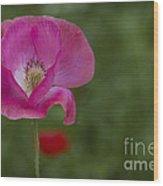 Pink Poppy. Wood Print