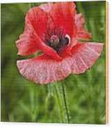 Pink Poppy Flower Among The Green Background Wood Print