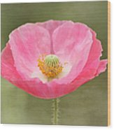 Pink Poppy Flower Wood Print