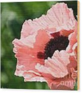 Pink Poppy Today Wood Print