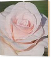 Pink Promise Wood Print by Nancy Edwards