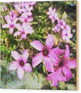 Pink Propellers  Wood Print