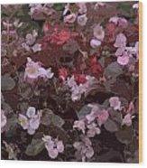 Pink Purple Riot Wood Print
