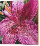 Pink Rain Speckled Lily Wood Print