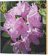 Pink Rhodie Wood Print
