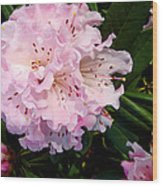 Pink Rhodies Wood Print