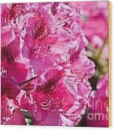 Rhododendron Called Azalea Bright Pink Flowers  Wood Print