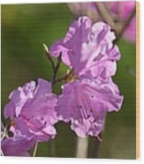 Pink Rhododendrons Wood Print