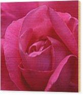 Pink Rose 02 Wood Print