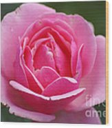 Pink Rose 08 Wood Print
