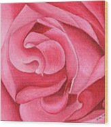 Pink Rose 14-1 Wood Print by William Killen