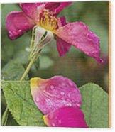 Pink Rose And Its Petals Wood Print