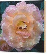 Pink Rose Bathed In Rain Wood Print