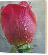 Pink Rose Bud With Drops Wood Print