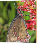 Pink Rose Butterfly Wood Print