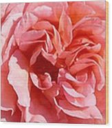 Pink Rose Closeup Wood Print