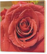 Pink Rose Drops Wood Print