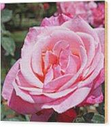 Pink Rose Flower Floral Art Prints Roses Wood Print