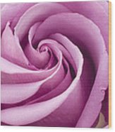 Pink Rose Folded To Perfection Wood Print