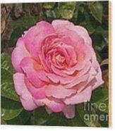 Pink Rose Full Bloom Wood Print
