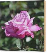 Pink Rose Garden Wood Print