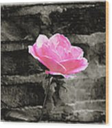 Pink Rose In Black And White Wood Print